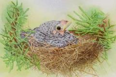 17 watercolor of baby bird in nest.