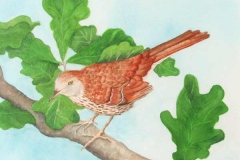 18 watercolor of a small brown bird on a tree branch.