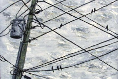 24 acrylic painting of birds on telephone wires.