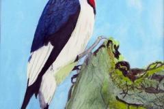 25 redheaded woodpecker on a treeside.