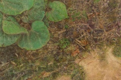 29 colored pencil of plants and underbrush.