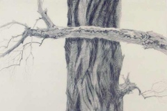 32 graphite drawing of bare tree.