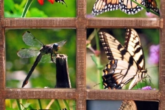 60 six square photos of five different butterflies and one dragonfly.