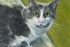 64 color scratchboard of a gray and white green-eyed cat staring at you.