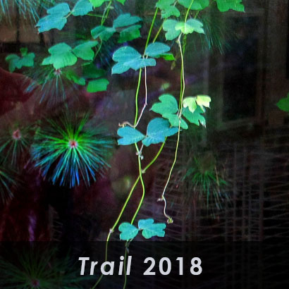 trail 2018 with background of green leaves