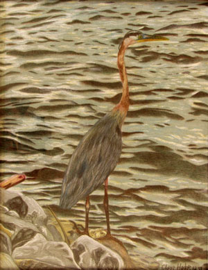 Great Blue Heron by Claye Hodge