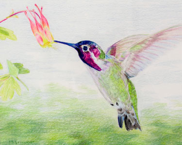 Hummingbird by Isabelle Griesmyer