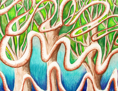 Mangrove by Donna Biddix