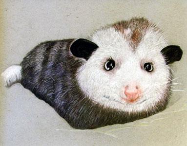 Possum Love by Rheta Conley