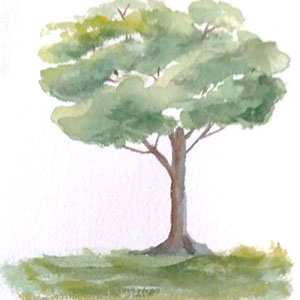 watercolor of tree by Ron Shepard