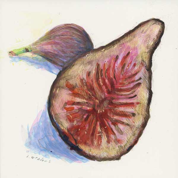"Color scratchboard drawing of ""Home Grown Figs"" by Lori-McAdams."