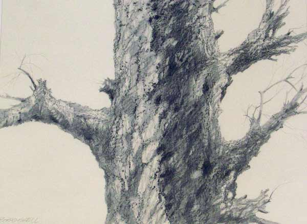 "Graphite drawing ""Tree Series Drawing no. 4"" by Wil Bosbyshell."