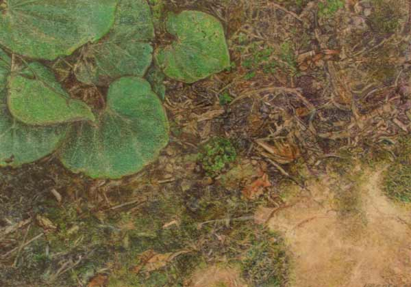 29 Lu Reeves, The Edge of the Earth, colored pencil. 29 colored pencil of plants and underbrush.