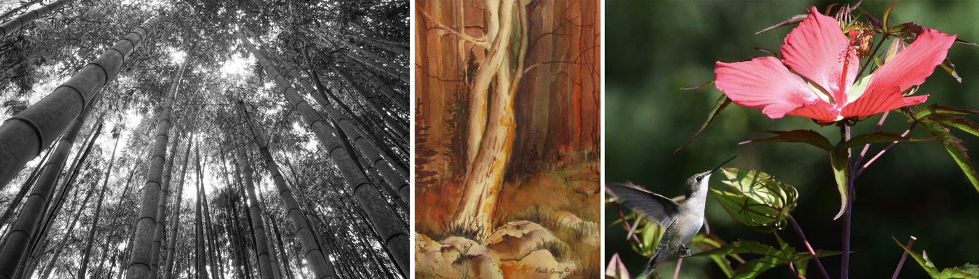 artwork in Nature Reconsidered and Trail exhibit at Southern Arts Society.