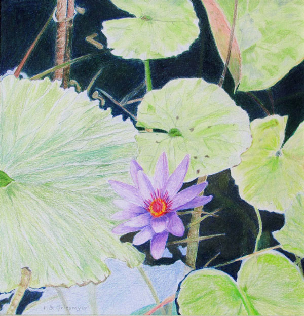Water-Lily-by-Isabelle-Griesmyer